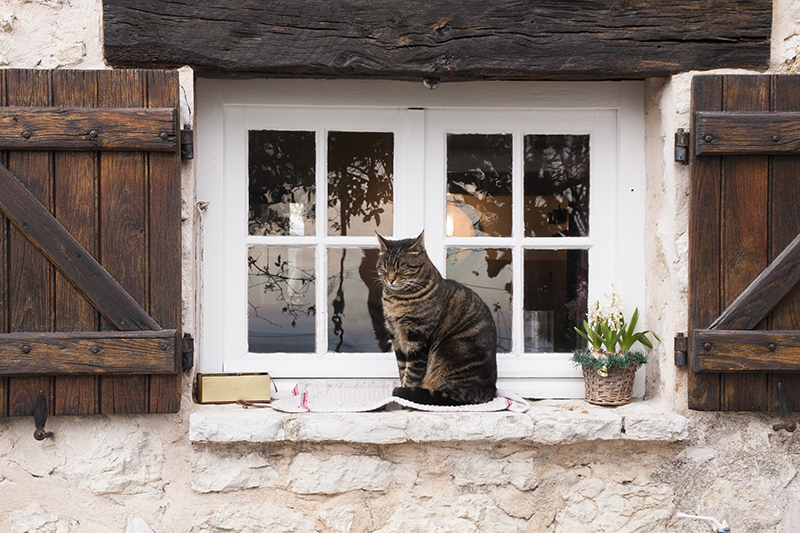 katten-frankrijk-002