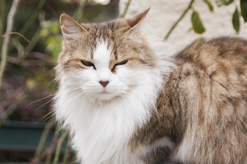 katten-frankrijk-003