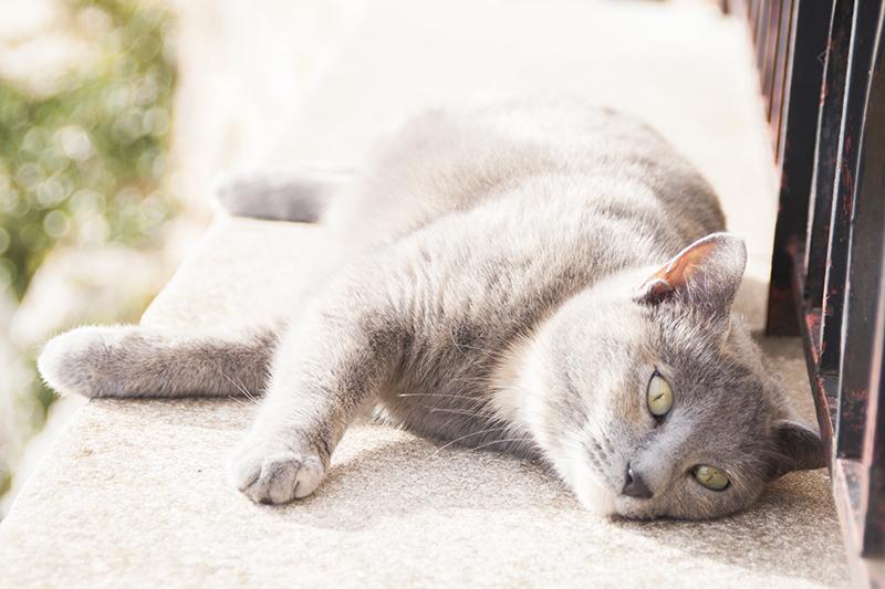 katten-frankrijk-004