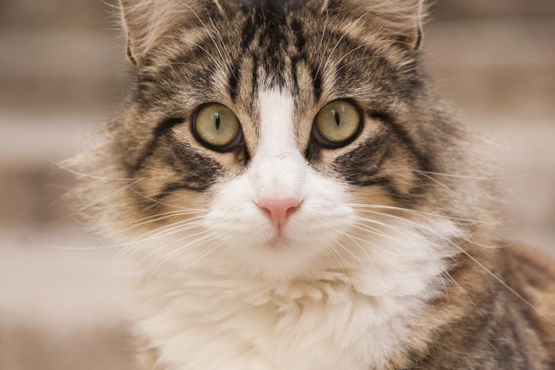 katten-frankrijk-005