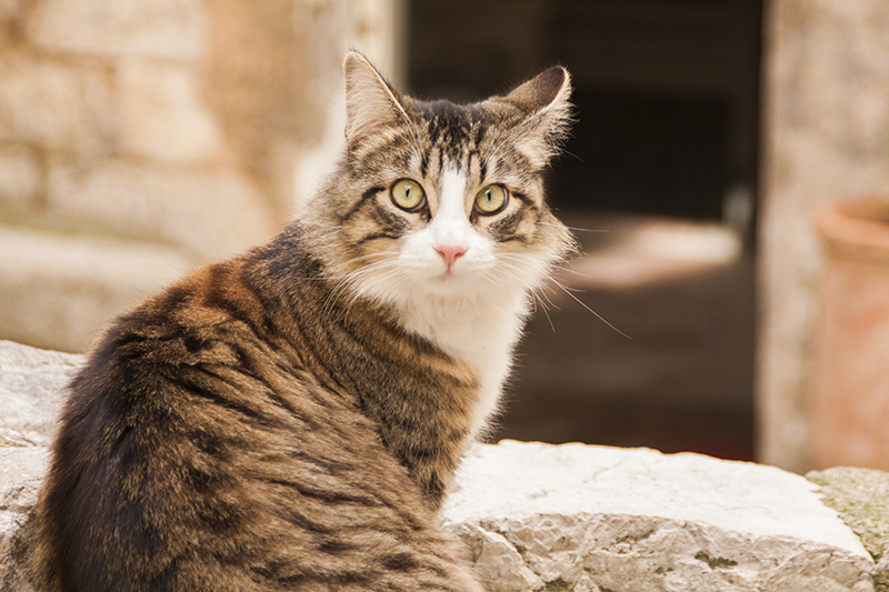 katten-frankrijk-006