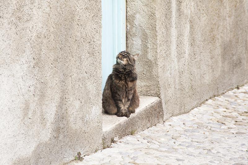 katten-frankrijk-007