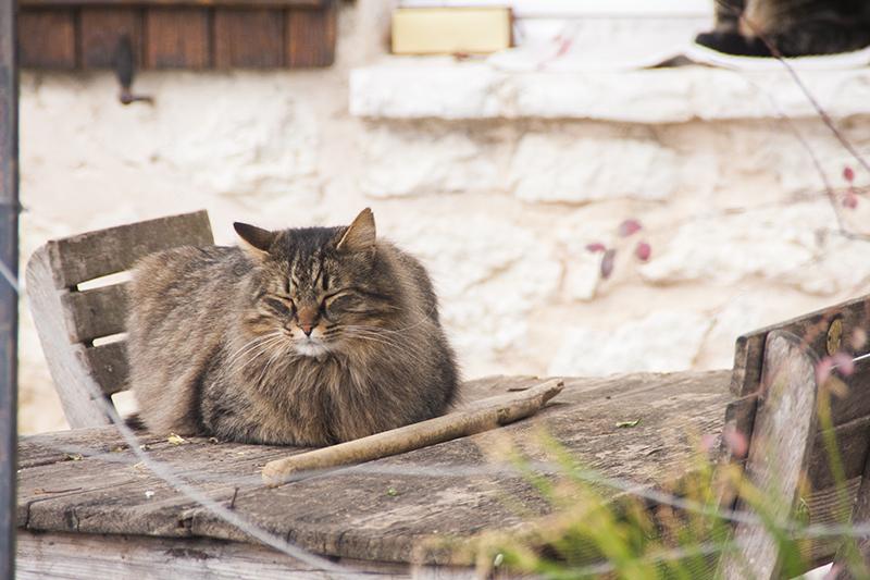katten-frankrijk