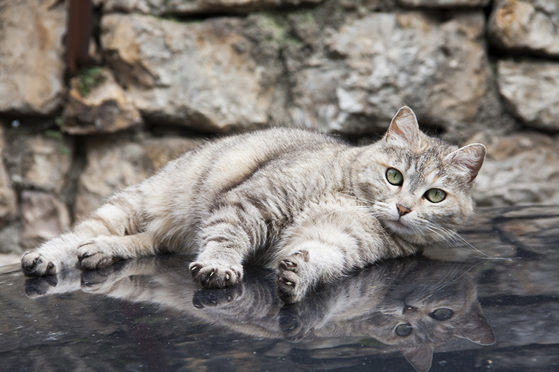 katten-frankrijk-001