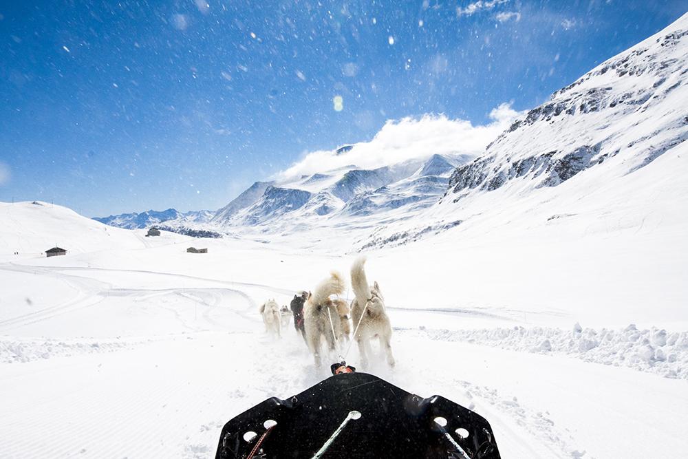 hondensledetocht-alpen-01