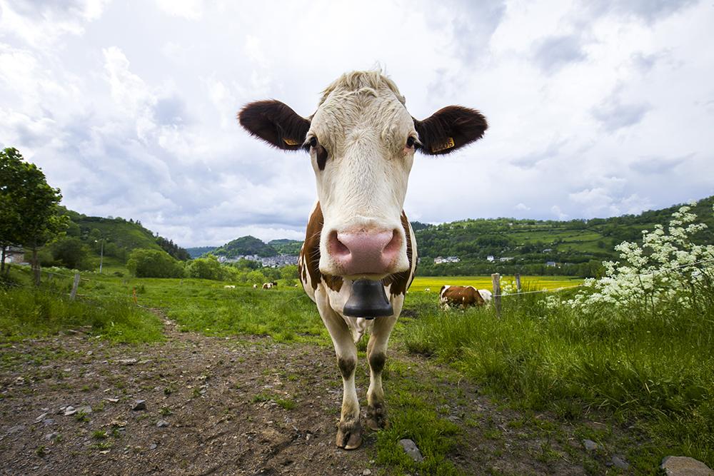 kaasboerderij-auvergne-002