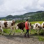 En route in de Auvergne: van kaasboerderijen en landschappen