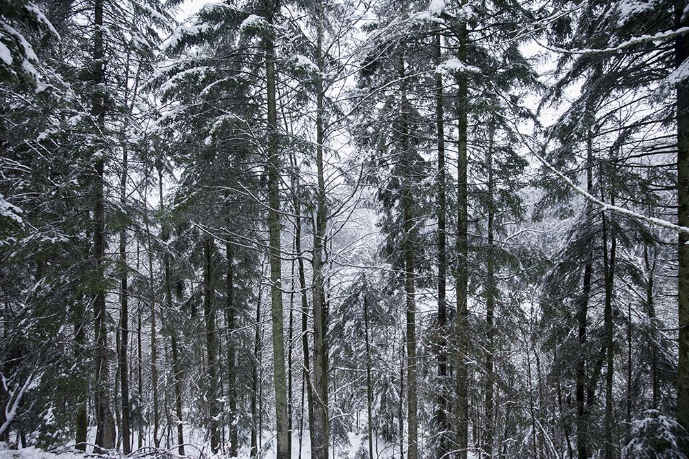 winterreis-vogezen-002